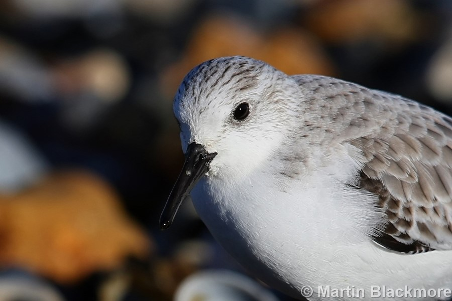 Sanderling Seaview Duver Isle of Wight